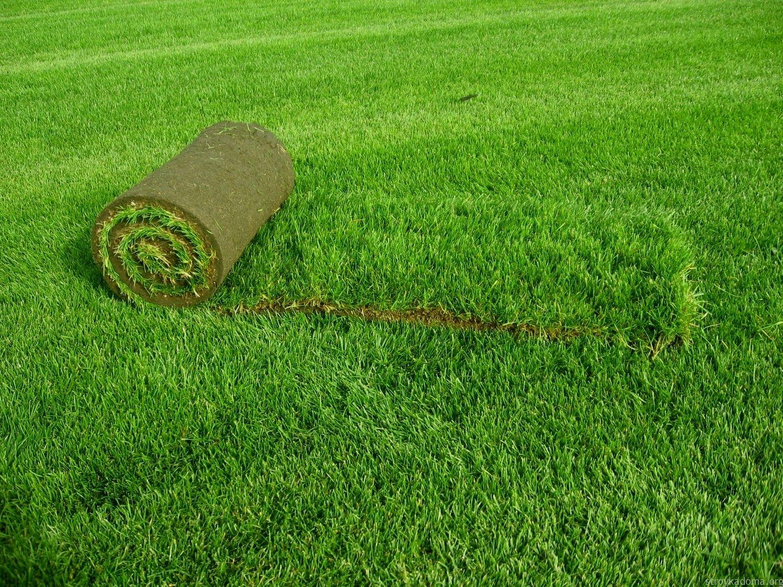 Подходящий тип газона 3