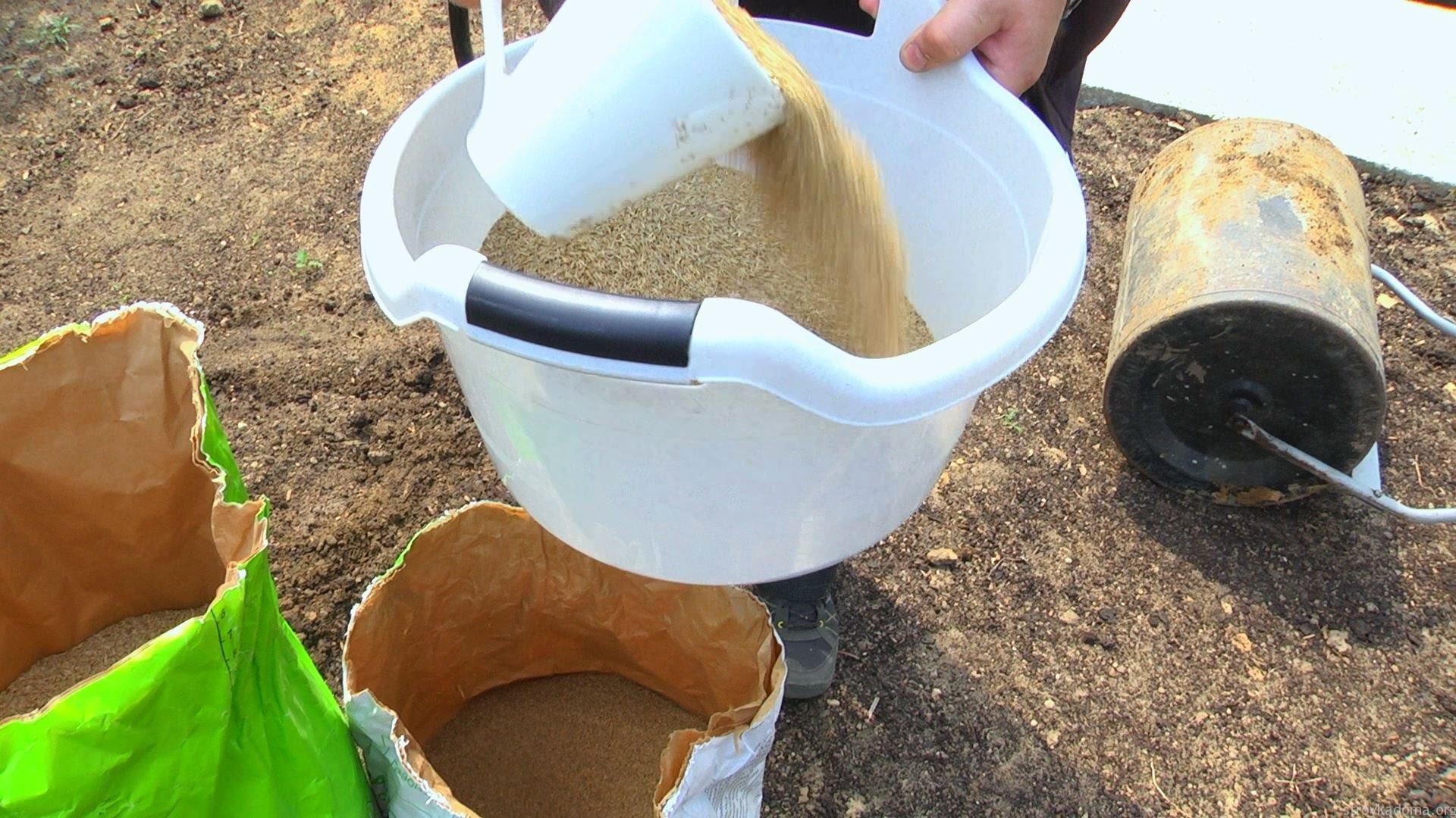 Как засеять газон на даче своими руками 713