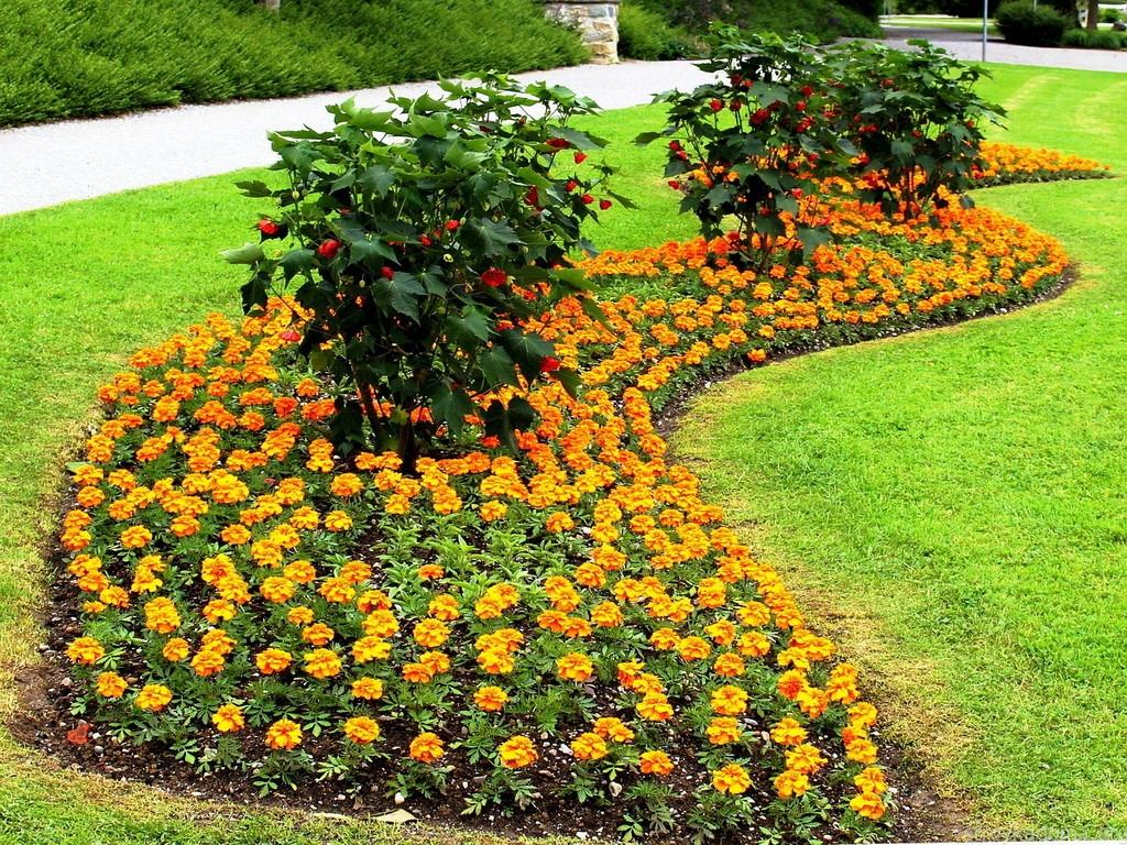 Рабатки клумбы и цветники на даче своими руками фото 616