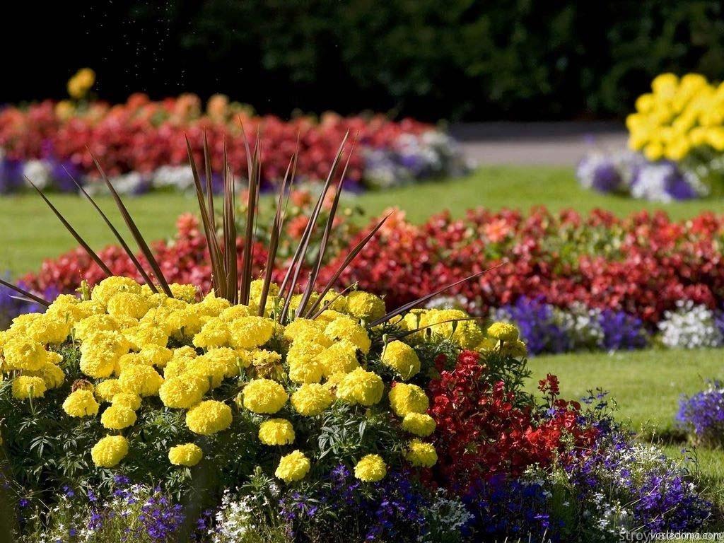 Летние цветы для клумбы
