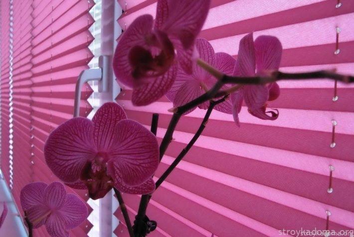 Шторы цветочного оттенка могут и регулировать интенсивность освещения, и создавать особую атмосферу